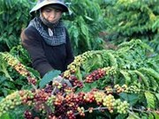 Vietnam seeks to increase value of coffee products