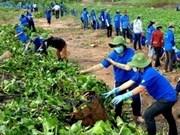 Da Nang strives for green environment