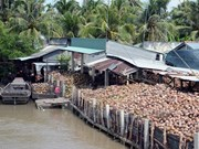 Coconut products account for 30 percent of Ben Tre's exports