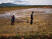 Ninh Thuan tackles prolonged drought