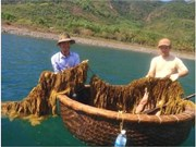 Seaweed project funded to improve local livelihood