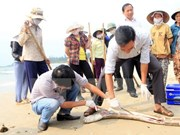 Quang Binh aids farmers over fish deaths