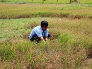 Tien Giang implements project fighting drought, saline intrusion