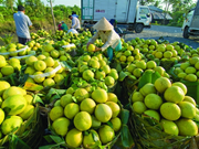 Less Mekong Delta fruit, higher prices