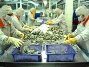 Ca Mau faces shrimp scarcity for export due to drought