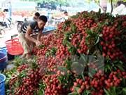 Workshop boosts fresh lychee exports via Lang Son border gates