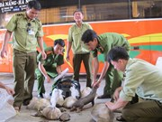 Wild animals rescued from illegal trade