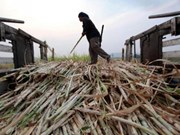 Thailand's sugar output declines from previous crop