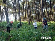 Vietnam, Laos provinces review joint forest protection