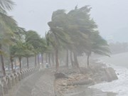 Quang Ninh braces for tropical storm Dianmu