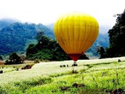 Moc Chau hosts int'l air balloon festival