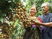 Vietnam expects 2.5 billion USD gain in fruit, veggie exports
