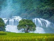 Ban Gioc Waterfall - Natural masterpiece in Southeast Asia