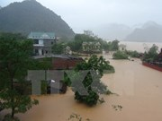 Government gives rice aid to flood-hit central provinces