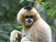 Book on primate species launched