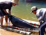 Fishermen learn to protect dolphins