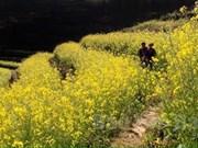 New plants to bloom across terrace fields in Mu Cang Chai