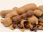 Vietnam to suspend tamarind imports from Indonesia