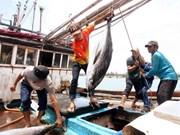 Nghe An develops offshore fishing ships