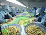 Cashew sector predicted to keep stable growth