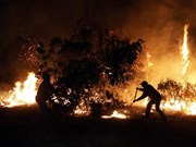 Indonesia to apply strict measures against forest fire-related firms