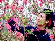 Peach flower festival kicks off in Lang Son