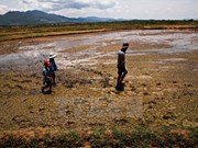 Vietnam at risk of sea desertification