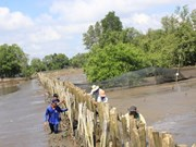 Community role in mangrove forest management
