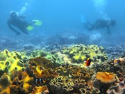 Vietnam's sea accommodates 1,100 sq.km. of coral reefs