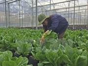 Israel assists Dien Bien farmers in growing safe vegetables