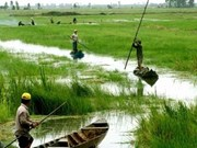 Mekong provinces work to build water pumping stations