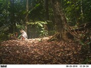 Camera traps snap endangered species