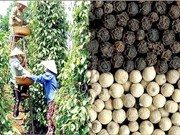 Vietnam's pepper faces stern quality challenge