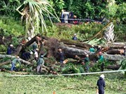 Singapore: heritage tree fall kills one, injures four