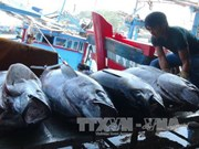 Vietnamese tuna loses competitive edge in Japan due to high taxes