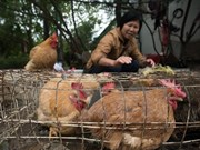 Vietnam proactive to prevent A/H7N9 avian flu