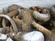 Students gain insight into pangolin conservation