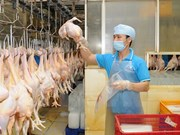 Vietnamese chicken breast to be exported to Japan