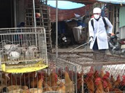 Quang Ninh strengthens border inspection given China's H7N9 outbreak