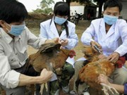 Lao Cai, Lang Son work to prevent cross-border avian flu