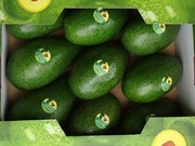 Dak Lak avocado targets world market