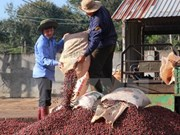 """Dak Lak strives to gain global recognition for """"Buon Ma Thuot Coffee"""""""