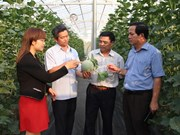 Central Highlands' high-tech agriculture development faces challenges