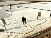 Bac Lieu salt prices rise sharply
