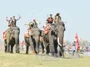 Elephant, boat races held in Buon Ma Thuot coffee festival