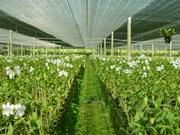 Phu Yen develops hi-tech agricultural zone