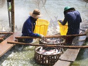 US continues anti-dumping duty order on Vietnamese fish fillets
