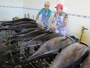 Tien Giang strives to catch 98,000 tonnes of seafood this year