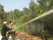 Ca Mau: over 11,000 hectares of forest on red fire alert