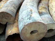 Customs at Tan Son Nhat airport seize products from elephant tusks